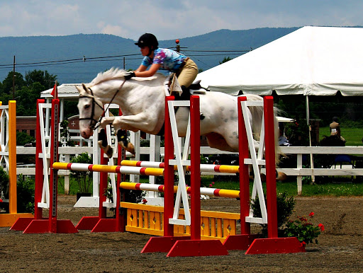 Photos from June 19's afternoon classes at the Roanoke Valley Horse Show