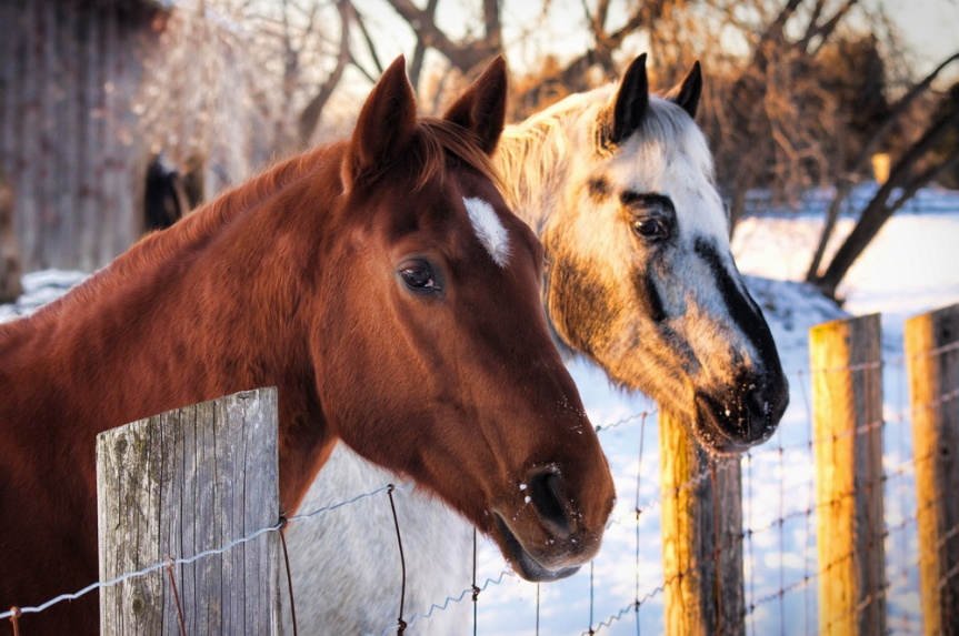 GET YOUR FIX: Horse events in the Roanoke area Jan.17-18