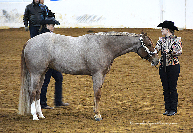 Buy Horse Online