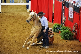 This palomino did not sell.