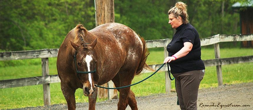 Natural Horsemanship morning ground session.