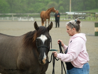 Karen Corvin works with her horse, Whiskey.