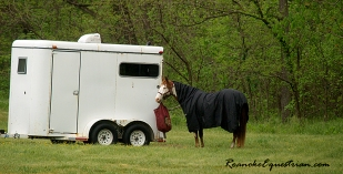 A horse waits at the trailer.