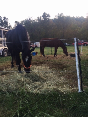 Electric fence is used by many to make pens for the horses.