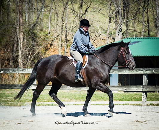 "Dedi Spradlin took first in the hunter pleasure on her Percheron/Thoroughbred mare Fairweather, aka ""Molly."""