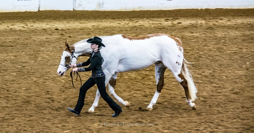 APHA Eastern National Championship entries give hope for growth of series